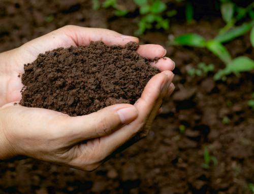 Building Soil Carbon on Your Farm