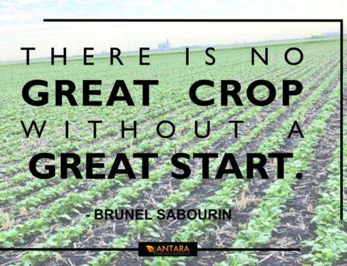 There is No Great Crop Without a Great Start
